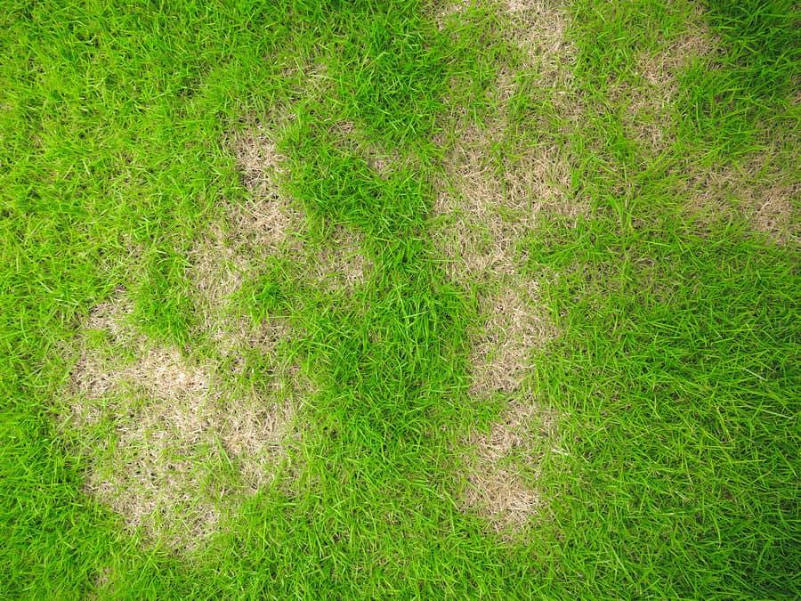 Yellow spots on lawn